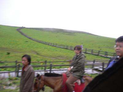 Horsesuse_7